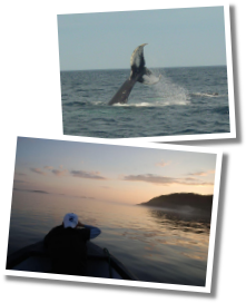 Skipper Jim's Boat Tours, Guests, Whale Watching